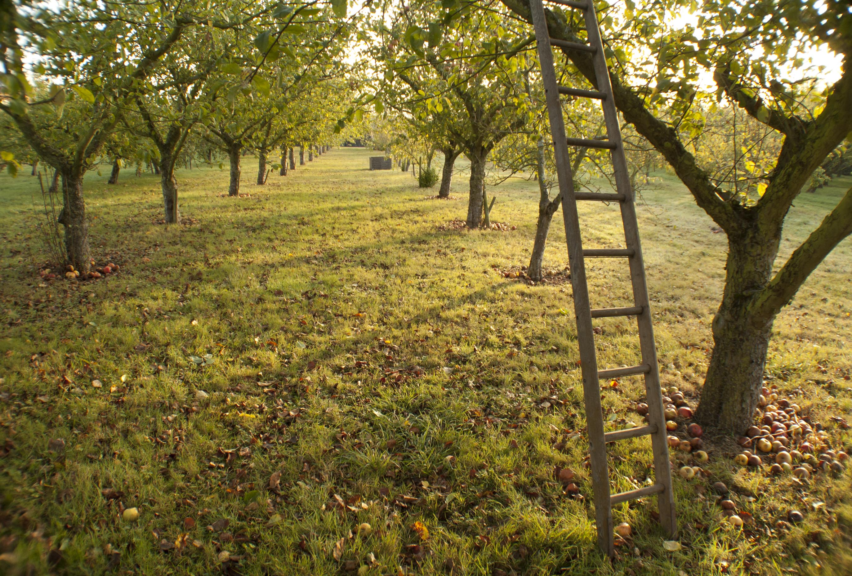 Dragon Orchard Putley